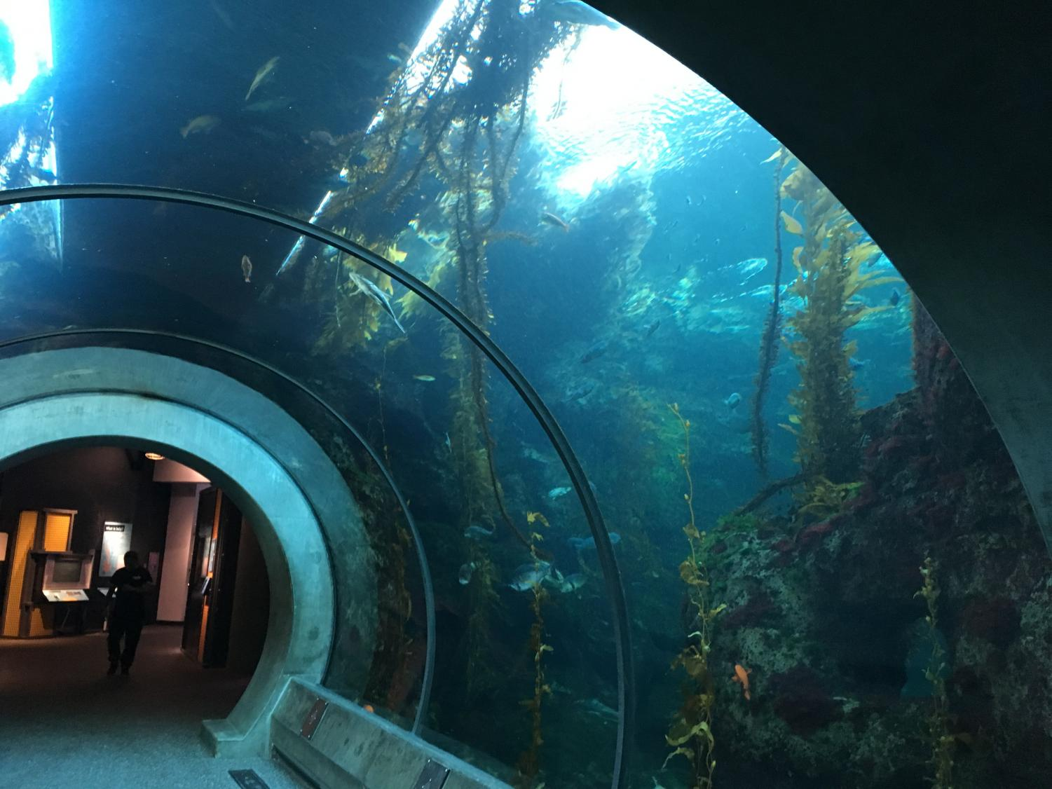 The Science Center kelp forest tank's tunnel.