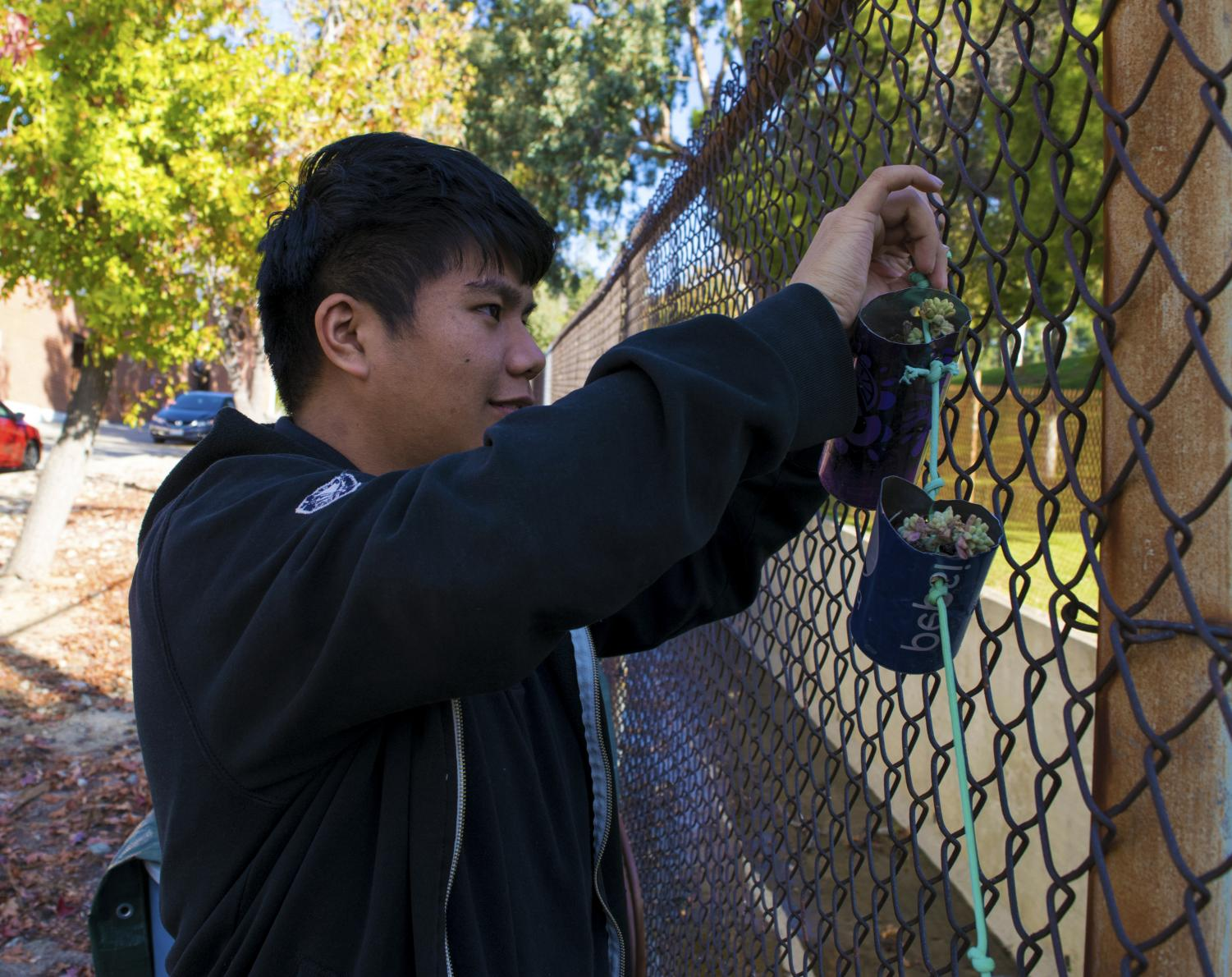 A Green Club member tying a plant to the fence.