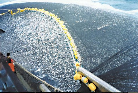 The deceptive practices of the fishing industry has put a vital ecosystem at risk of extinction.